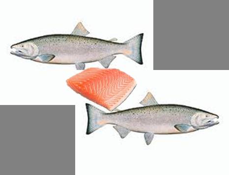 Plats base de poisson envie de cuisiner - Cuisiner saumon surgele ...